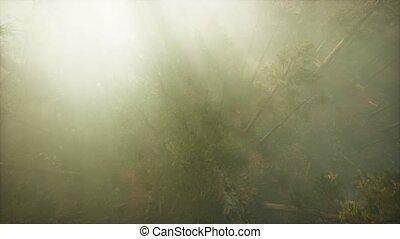 séquoia, par, arbre, rupture, brouillard, bourdon, pin, exposition