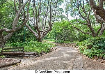 sétány, alatt, a, kirstenbosch, nemzeti, botanical kert