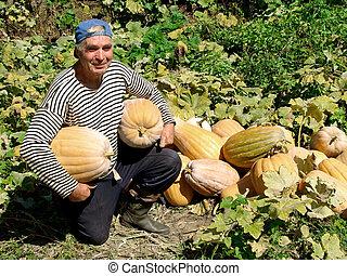 sênior, abóboras, jardineiro
