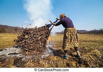 sênior, rural, mulher, queimadura, caído sai