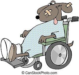 sílla de ruedas, perro, enfermo