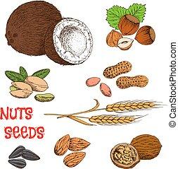 símbolo, cereal, frijoles, nueces, bosquejo, semillas