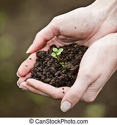 símbolo de la vida, joven, mano, ambiental, tenencia, fresco, nuevo, plant., conservation.