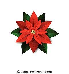 símbolo, flor, natal, poinsettia