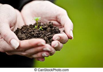 símbolo vida, jovem, mão, ambiental, segurando, fresco,...