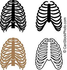 símbolos, costilla, vector, jaula, humano