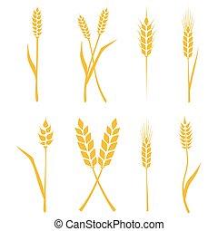 símbolos, elementos, trigo, illustration., ícones, set., orelhas, isolado, embalagem, experiência., cerveja, vetorial, desenho, label., agrícola, arroz branco, ou, pão
