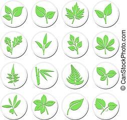 símbolos, planta, selección, hoja, iconos, vibrante, verde, estilizado, leafs