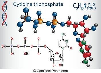 síntese, substrate, (ctp), molécula, molécula, aquilo,...