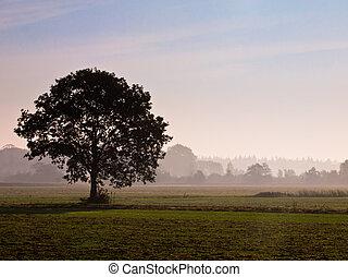 só, árvore, em, agrícola, paisagem, durante, manhã, névoa