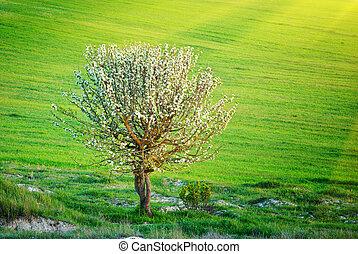 só, árvore, em, prado
