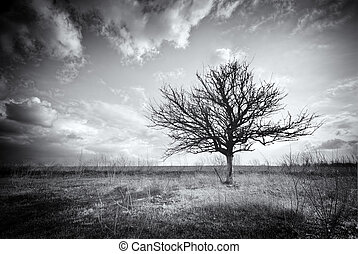 só, árvore., morto