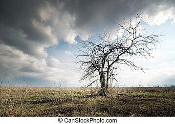 só, árvore, morto