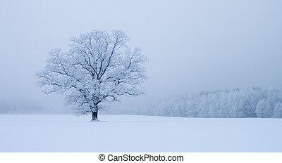 só, árvore, snowdrift