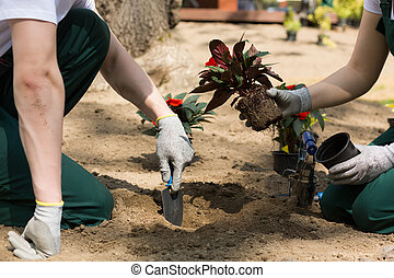 sólo, jardineros, tomado, olla, plantación, flores, ser, ...