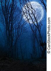 sötét, éjszaka, erdő, agaist, holdtölte