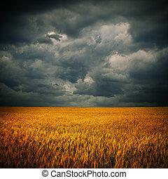 sötét felhő, felett, búza terep