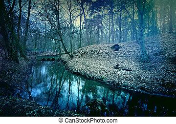 sötét, forest., varázslatos, titokzatos