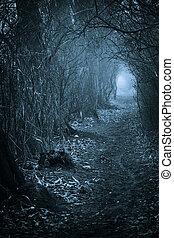 sötét, kísérteties, át, erdő, átjáró