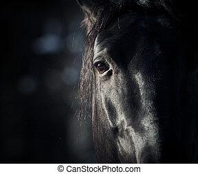 sötét, ló, szem