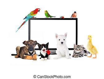 söt, djuren, nära, lcd, övervaka