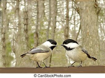söt, fågel