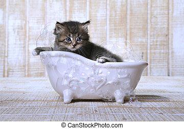 söt, förtjusande, kattunge, in, a, badkar, avkopplande