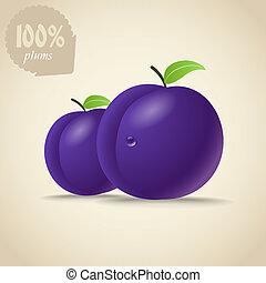 söt, frisk, plommon, illustration, violett