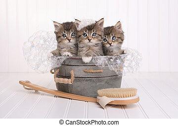 söt, kattungar, in, tvättbalja, fik, vårdad, av, luftbubbla bada