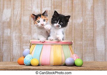 söt, kattungar, insida, par, korg, påsk