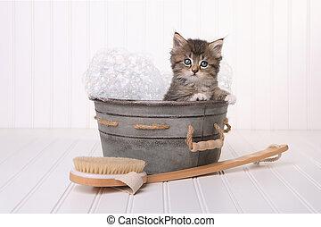 söt, kattunge, in, tvättbalja, fik, vårdad, av, luftbubbla bada