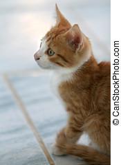 söt, litet, kattunge