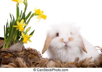 söt, litet, vit, kanin