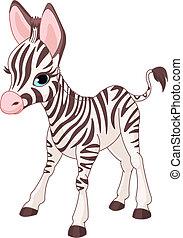 söt, zebra, föl