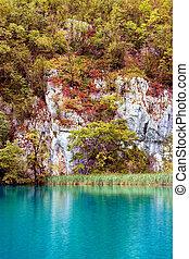 sø skov