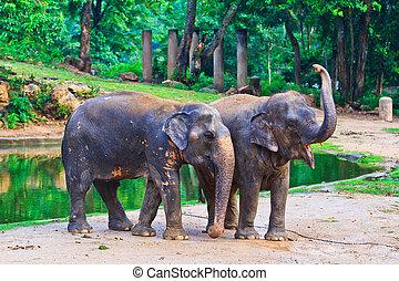 südosten, elefant, asia, thailand
