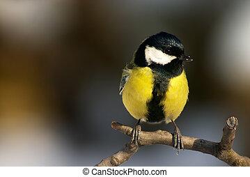 sýkorka, ptáček