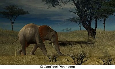 słoń, pieszy, przez, przedimek określony przed rzeczownikami, dżungla