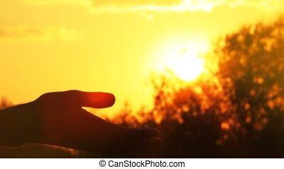 słońce, dotyka, człowiek, ręka