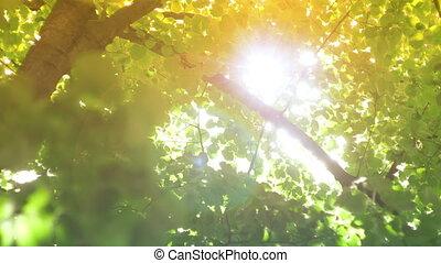 słońce, drzewa, soczewka, przez, migotać, lustrzany