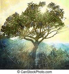 słońce, drzewo