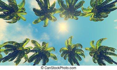 słońce, kokosowe dłonie, zenit, jego