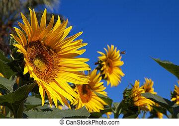 słońce, kwiaty, błękitne niebo, pszczoły