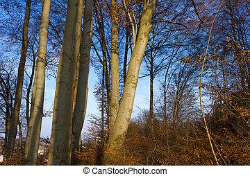 słońce, przez, gałęzie, drzewo, lustrzany