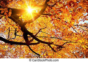 słońce, przez, złoty, liście, lustrzany