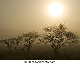 słońce, trzy, drzewa