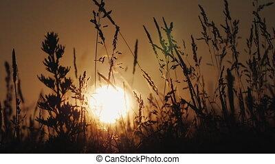 słońce, zmontowanie, przez, shines, trawa, falować