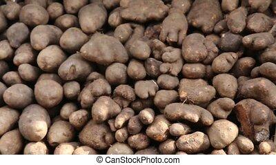 słodki ziemniak, chińczyk