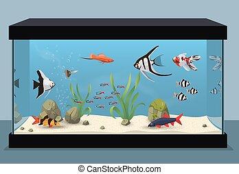 słodkowodny, akwarium, ilustracja