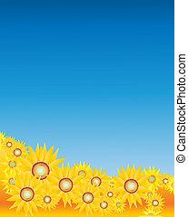 słoneczniki, niebo